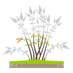 Erziehungsschnitt zum Neuaufbau der Pflanze.