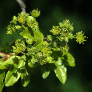 Heckenpflanzen bei GartenHit24.de online bestellen
